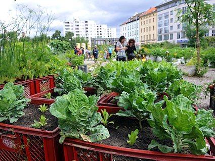 Les prémices de l'agriculture urbaine