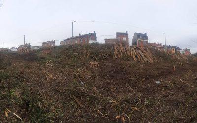 Intervention sur l'abattage quasi- total du petit bois, rue de Tavier, rue de la Limite.