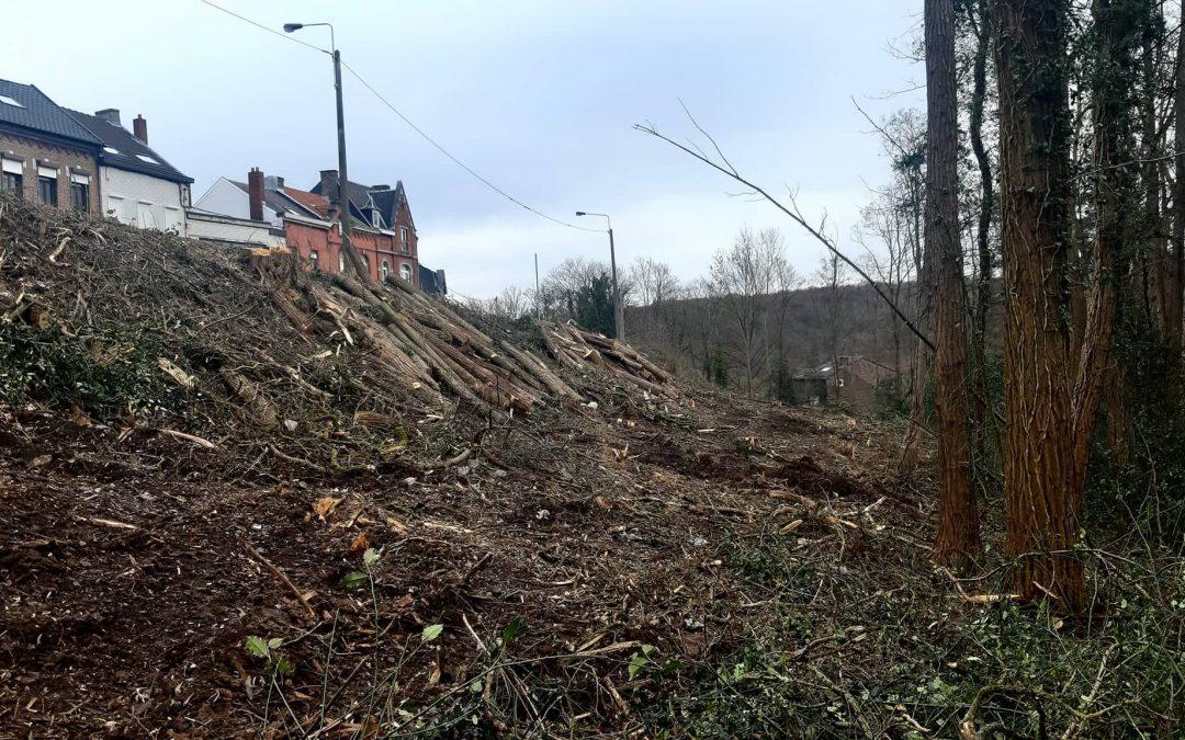 Intervention au Conseil Communal de ce 1er mars 2021, de notre conseillère Diana Carbonetti concernant l'abattage récents d'arbres.